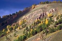 Árboles del otoño en la ladera Imagen de archivo libre de regalías