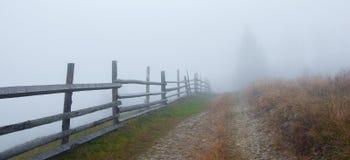 Árboles del otoño en la niebla Imágenes de archivo libres de regalías