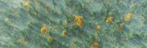 Árboles del otoño en la opinión de la niebla desde arriba Imagen de archivo