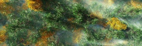 Árboles del otoño en la opinión de la niebla desde arriba Foto de archivo