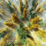 Árboles del otoño en la opinión de la niebla desde arriba Fotografía de archivo libre de regalías
