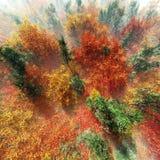 Árboles del otoño en la opinión de la niebla desde arriba Imagenes de archivo