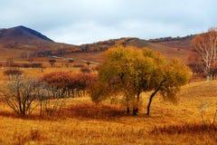 Árboles del otoño en los prados Imagen de archivo libre de regalías