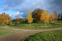 Árboles del otoño en luz del sol Fotografía de archivo