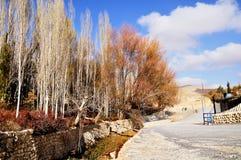 Árboles del otoño en Maaloula Foto de archivo libre de regalías