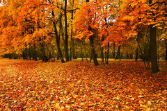 Árboles del otoño en parque Imágenes de archivo libres de regalías