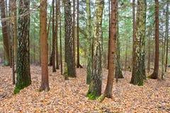 Árboles del otoño en parque de la ciudad foto de archivo libre de regalías