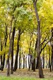 Árboles del otoño en parque de la ciudad Fotografía de archivo