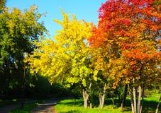 Árboles del otoño en parque de la ciudad Imagenes de archivo