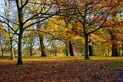 Árboles del otoño en parque regente del ` s Imagen de archivo