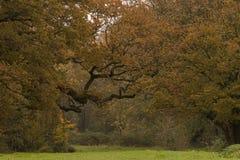 Árboles del otoño en poco campo común, Southampton foto de archivo