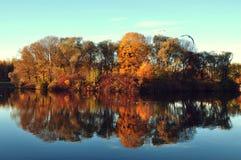 Árboles del otoño en un iseland Foto de archivo