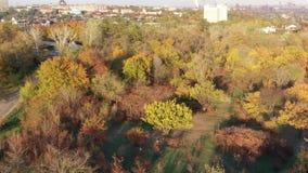 Árboles del otoño en un parque público almacen de video