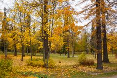 Árboles del otoño en vidas del amarillo del parque Imagen de archivo