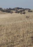 Árboles del otoño encima de la colina herbosa fotografía de archivo
