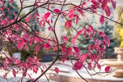 Árboles del otoño Hojas de otoño coloreadas en el parque Foto de archivo libre de regalías