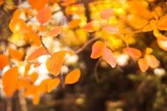 Árboles del otoño Hojas de otoño coloreadas en el parque Foto de archivo