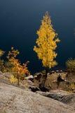 Árboles del otoño por el lago Imágenes de archivo libres de regalías