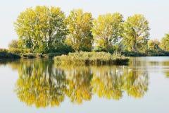 Árboles del otoño por una charca Imagenes de archivo