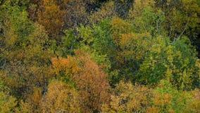 Árboles del otoño que crujen almacen de metraje de vídeo