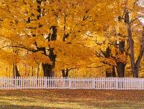 Árboles del otoño y cerca blanca Imagenes de archivo