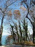 Árboles del otoño y el mar Foto de archivo libre de regalías