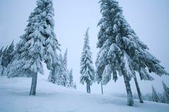 Árboles del paisaje del bosque del invierno en nevado con la helada blanca Foto de archivo libre de regalías
