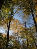 Árboles del paisaje de la primavera contra el cielo Foto de archivo