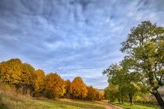 Árboles del paisaje del otoño contra el cielo azul Foto de archivo libre de regalías
