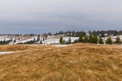 Árboles del paisaje y de pino de la montaña Imágenes de archivo libres de regalías