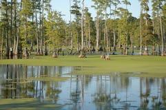 Árboles del pantano Fotos de archivo libres de regalías