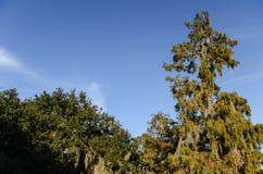 Árboles del pantano Fotografía de archivo libre de regalías