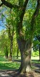 Árboles del parque Imagenes de archivo
