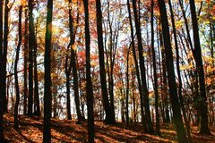 Árboles del parque de estado de Stone Mountain Foto de archivo