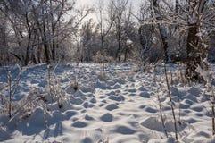 Árboles del parque de la nieve del invierno Fotos de archivo libres de regalías