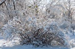 Árboles del parque de la nieve del invierno Foto de archivo libre de regalías
