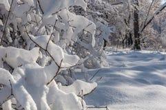 Árboles del parque de la nieve del invierno Imagenes de archivo