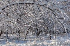 Árboles del parque de la nieve del invierno Imágenes de archivo libres de regalías