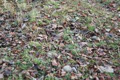Árboles del parque del otoño desnudos Imagen de archivo