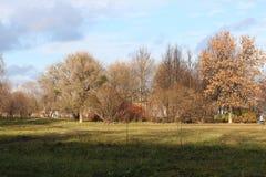 Árboles del parque del otoño desnudos Imágenes de archivo libres de regalías