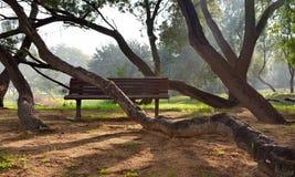 Árboles del parque doblados alrededor de bancos Foto de archivo libre de regalías
