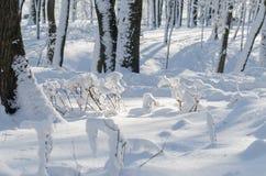 Árboles del parque del invierno en el tiempo soleado de la nieve fotos de archivo