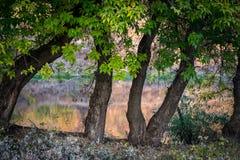 Árboles del pensamiento del río Imagenes de archivo
