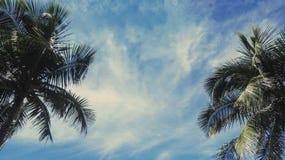 Árboles del plam del coco con el cielo Fotos de archivo