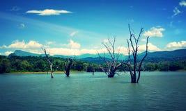 Árboles del río fotografía de archivo