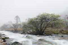 Árboles del río en niebla Imagenes de archivo