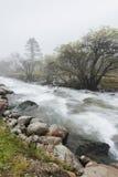Árboles del río en niebla Fotografía de archivo