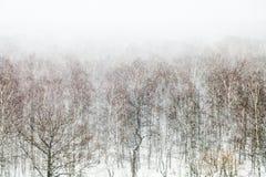 Árboles del roble y de abedul en ventisca de la nieve Fotografía de archivo libre de regalías