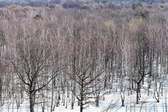 árboles del roble y de abedul entre la nieve de fusión en bosque Fotografía de archivo