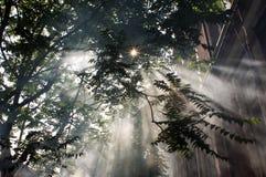 Árboles del sol del humo Fotografía de archivo